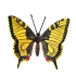 big yellow butterfly, viennese bronze