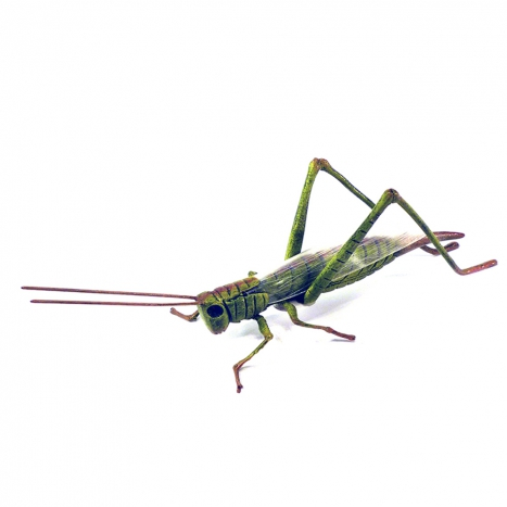 grass hopper,